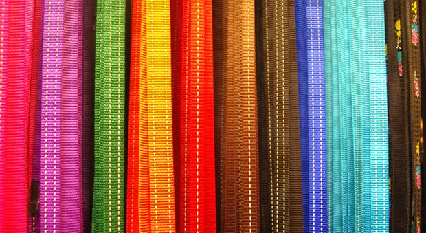 colourful leashes